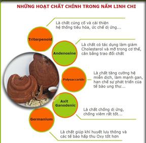Cách dùng Nấm Linh Chi