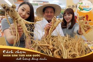 Cách chọn mua sâm tươi Hàn Quốc